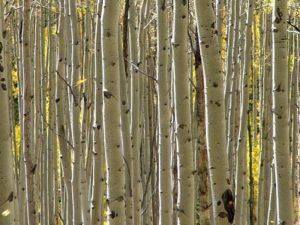 Wet en regelgeving – bomen en bos
